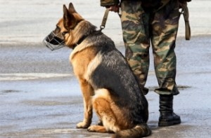 Muzzled Guard dog