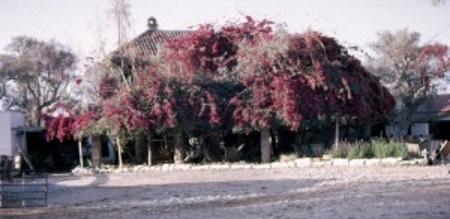 Newman's Farm