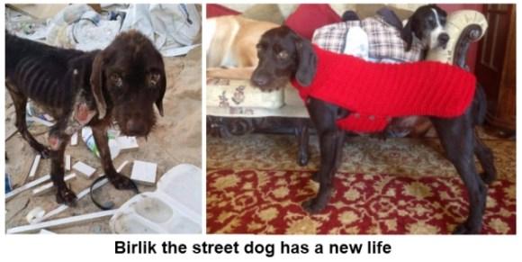 Birlik the strret dog