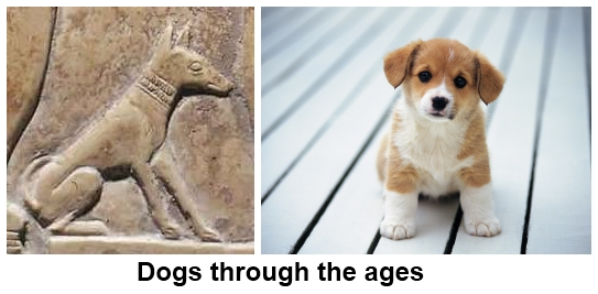 Dogs through the ages