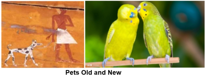 Pets old and new