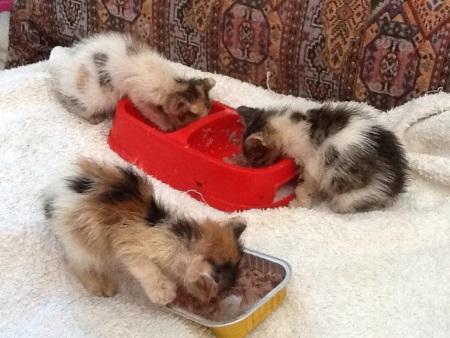 KAR orphaned kittens