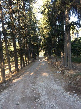 cypress-alleyway-gh