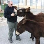 kuzey-and-donkeys