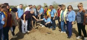 Lions plant olive tress 2