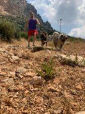 Dog walking 4