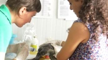 Taşkent Wildlife Rescue and Rehabilitation Centre, 8