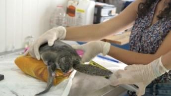 Taşkent Wildlife Rescue and Rehabilitation Centre, 9