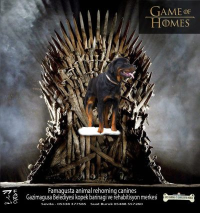 Game of Homes (2)