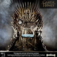 Game of Homes (8)