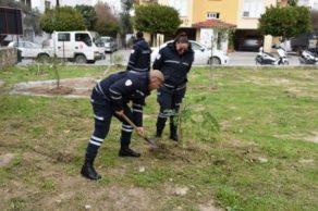 Belediye çalışanları fidan dikti (4)