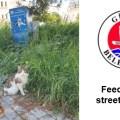 Girne Municipality Does Not Neglect Animal (1) image