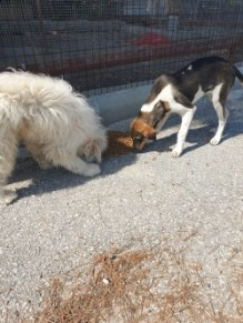 Girne Municipality Does Not Neglect Animal (1)