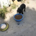 Girne Municipality Does Not Neglect Animal (5)