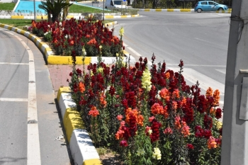 Girne Municipality started cleaning work across the City (1)