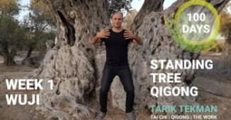 Standing Tree Qigong 350