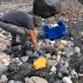 Esentepe coastline has been cleared (3)