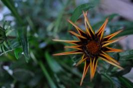Single Flower 1