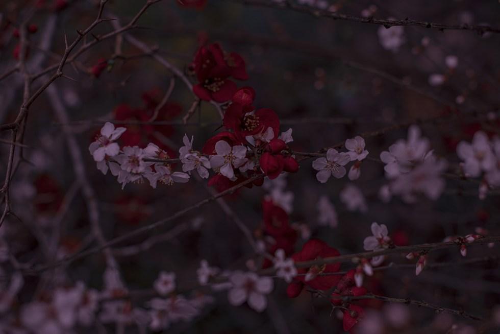 Japanese garden - Caen 2020