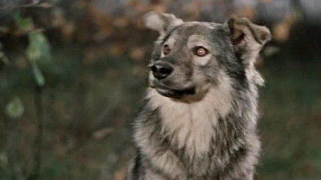 Популярные собачьи клички: главные загадки