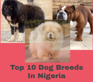 Top 10 Most Popular Dog Breeds In Nigeria And Puppy Prices 2020