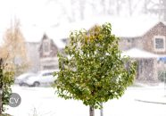 first-snow-in-dec-2016-5