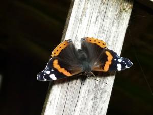 butterfly-1136760_960_720