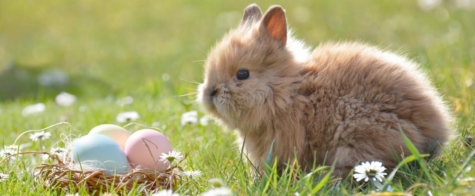 nie rezygnuj z dieta w święta - lekkostrawna Wielkanoc jest możliwa