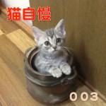 【猫自慢】みんながTwitterにあげた可愛い猫まとめてみた003(2015/09/01〜2015/09/15)