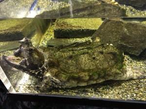 箱根園水族館写真8