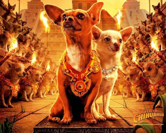 ディズニー映画『ビバリーヒルズ・チワワ』シリーズの主人公パピとクロエの画像