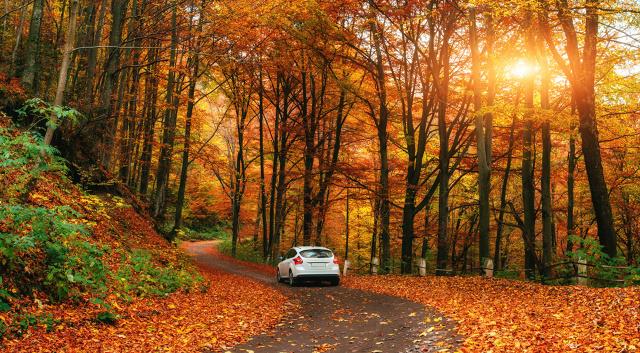 Fall Path Wallpaper Samoch 243 D Jesienią Jak Przygotować Auto
