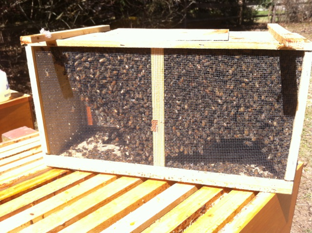 3 Pound Package of Honeybees
