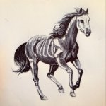 Skeleton Horse By Heinrich Darkhound Fur Affinity Dot Net