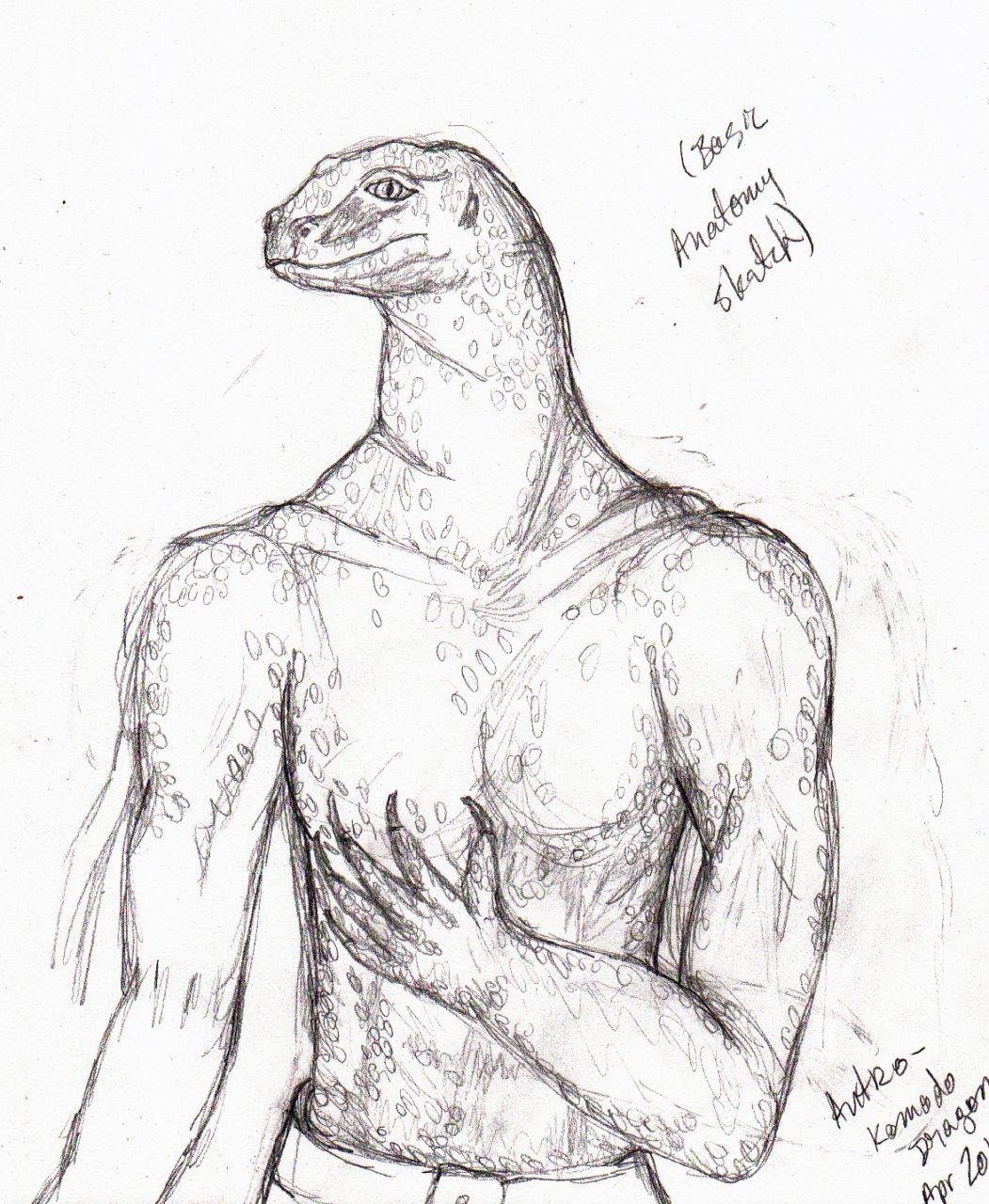 Komodo Dragon Anatomy