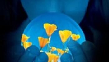 Blauwe Maan – Alyson Noël