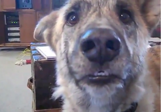Device Allowing Dogs to Speak to Humans Being Created