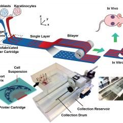 Working Of Laser Printer With Diagram 1995 Ford Ranger Radio Wiring Printalive 3d Bioprinter Creates 39living Bandage 39 Skin