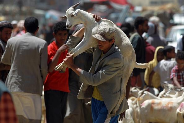 Eid al-Adha animal sacrifice
