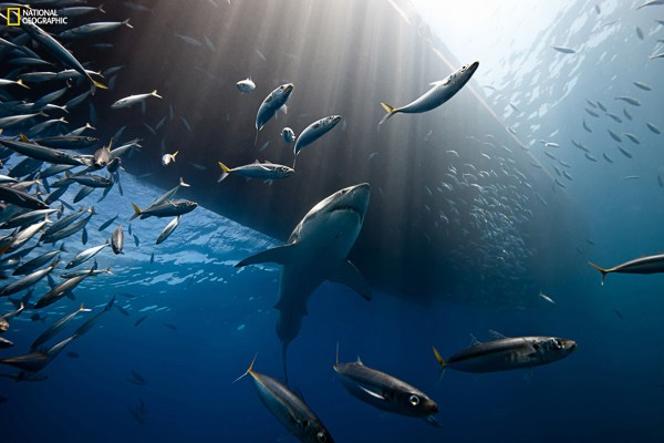 National Geographic Photo Contest 2014 Beautiful