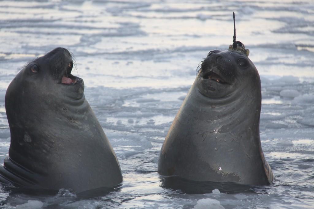 seal tweets provide ocean