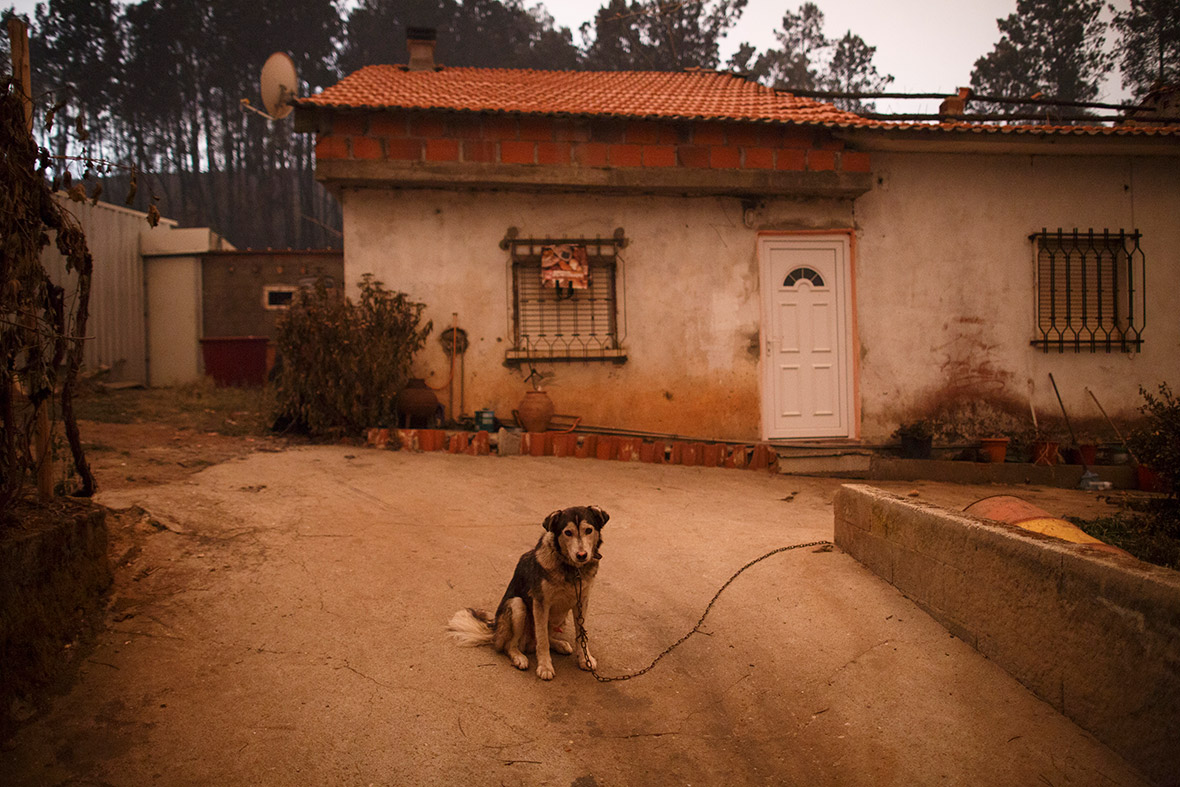 Portugal forest fires Pedrogao Grande  Chilling photos show ferocity of Portugal's worst wildfires, killing people in cars as they fled portugal forest fires pedrogao grande