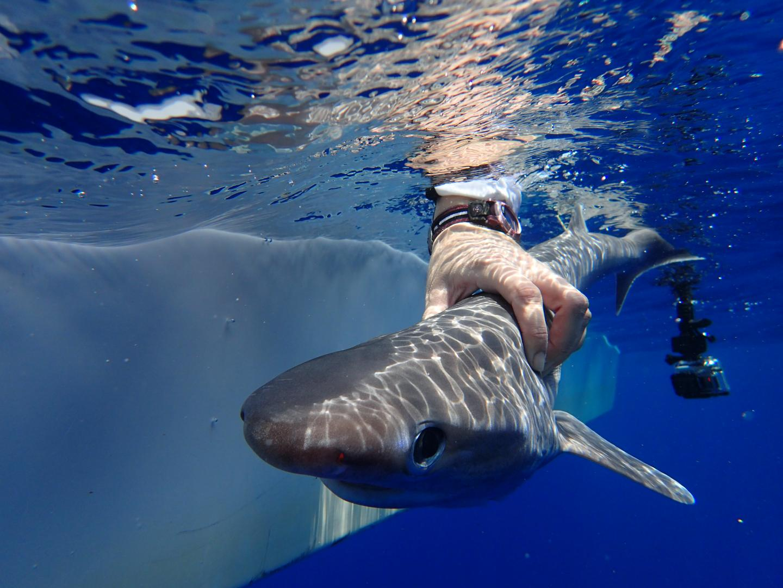 New Shark Species Discovered In The Atlantic Ocean Had