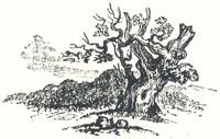 Woodland Scenery, Tailpiece to