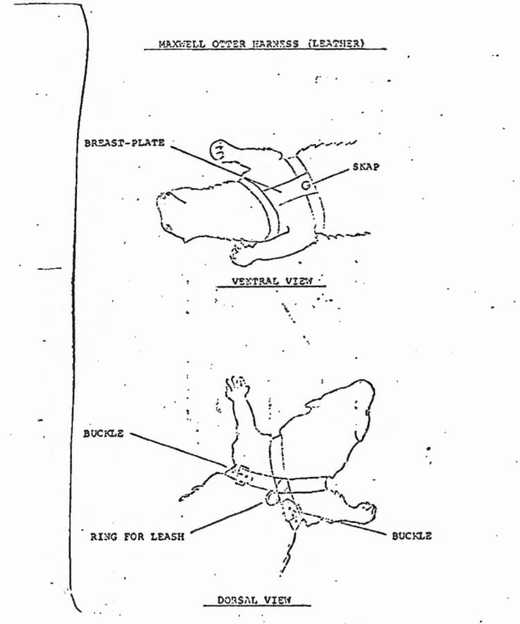 medium resolution of otter diagram