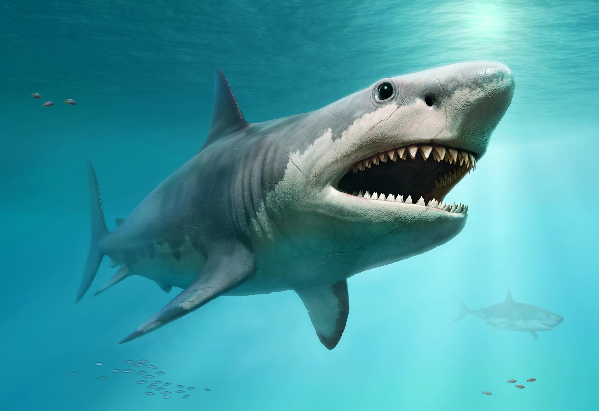 River Bull Caught Shark