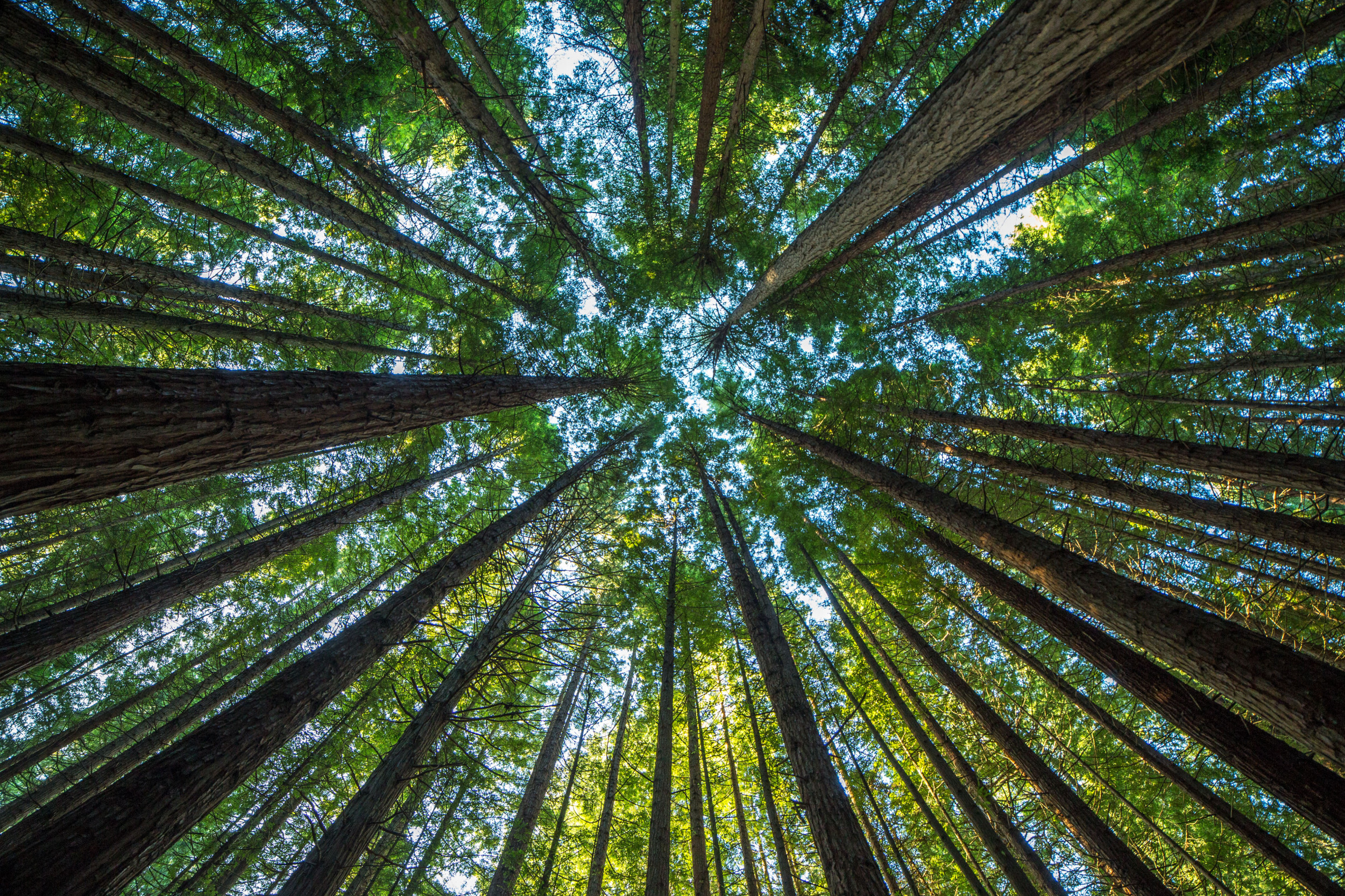 Scientists Say They Ll Plant 1 Billion Trees By Using