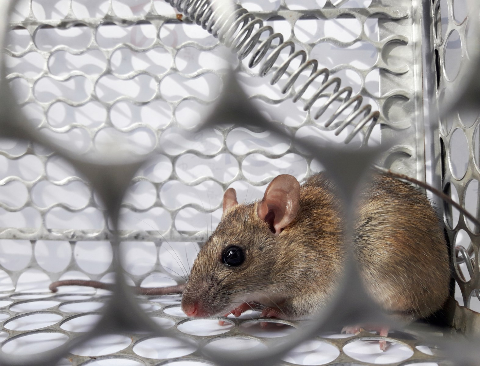 What Is Hantavirus? Man in China Tests Positive After Dying of ...