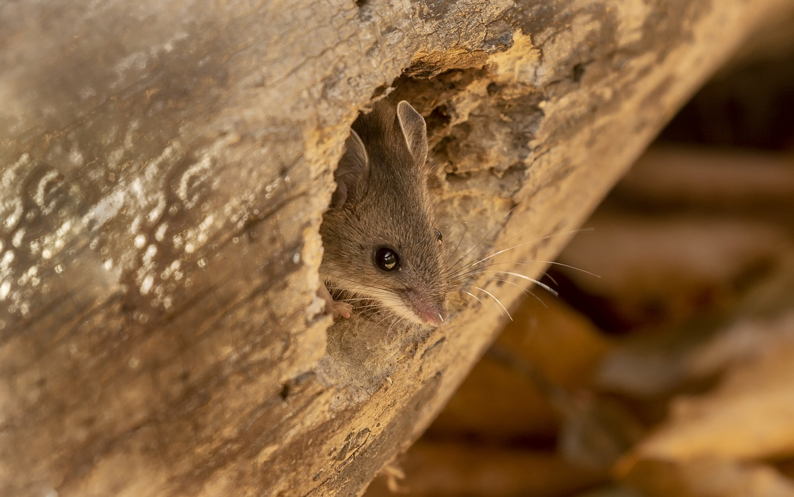 Hantavirus Death in China Does Not Mean the Start of Another ...