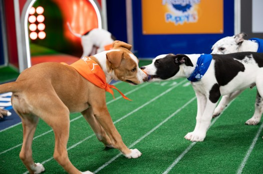 What Happens To All the Adorable 'Puppy Bowl' Players ...